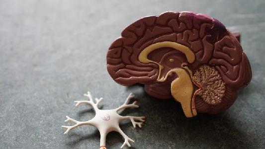 5 Kebiasaan Supaya Fungsi Otak Tetap Optimal | arum.me